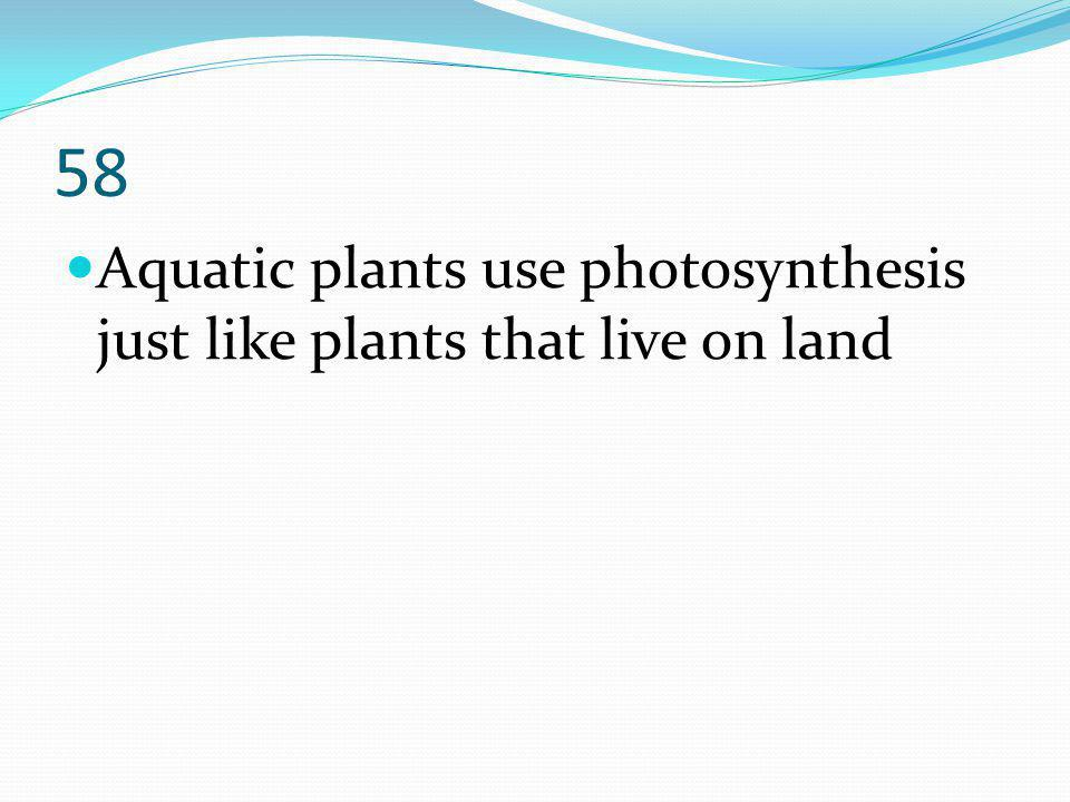 58 Aquatic plants use photosynthesis just like plants that live on land