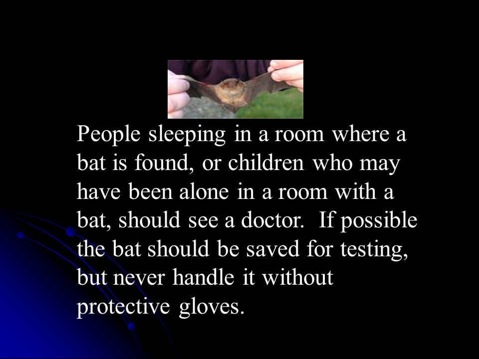 People sleeping in a room where a bat is found, or children who may have been alone in a room with a bat, should see a doctor.
