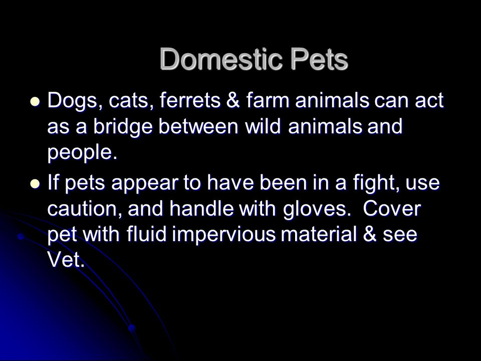 Domestic Pets Dogs, cats, ferrets & farm animals can act as a bridge between wild animals and people.