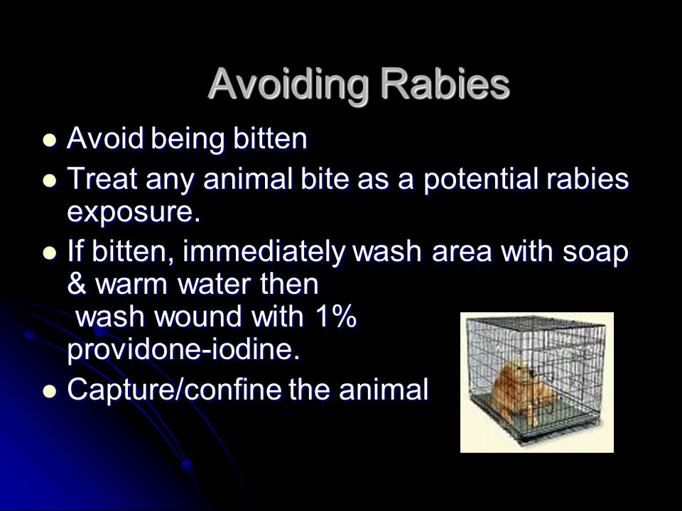 Avoiding Rabies Avoid being bitten