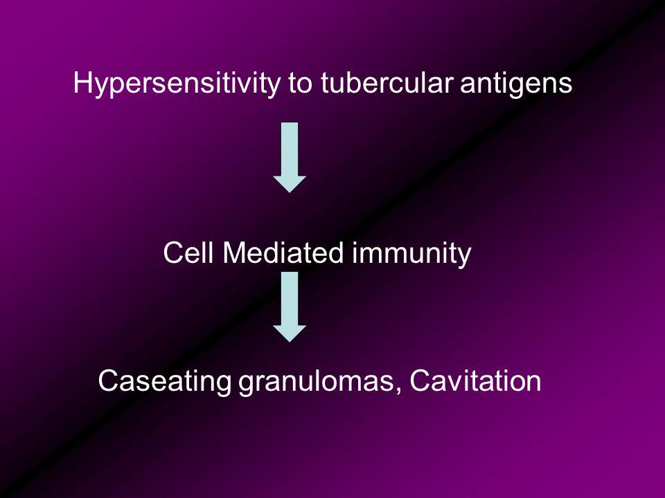 Hypersensitivity to tubercular antigens