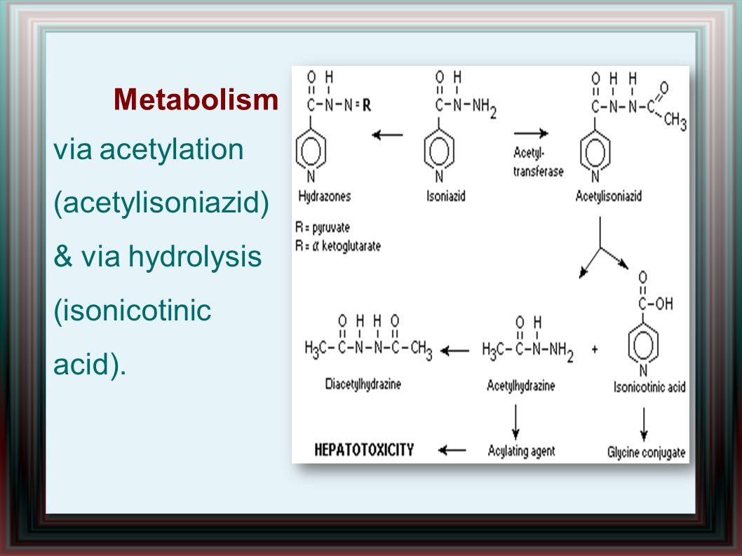 Metabolism via acetylation (acetylisoniazid) & via hydrolysis (isonicotinic acid).