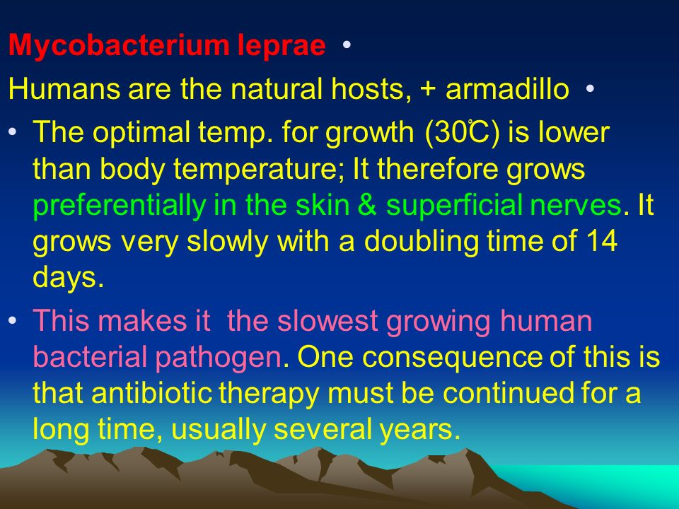 Mycobacterium leprae Humans are the natural hosts, + armadillo.