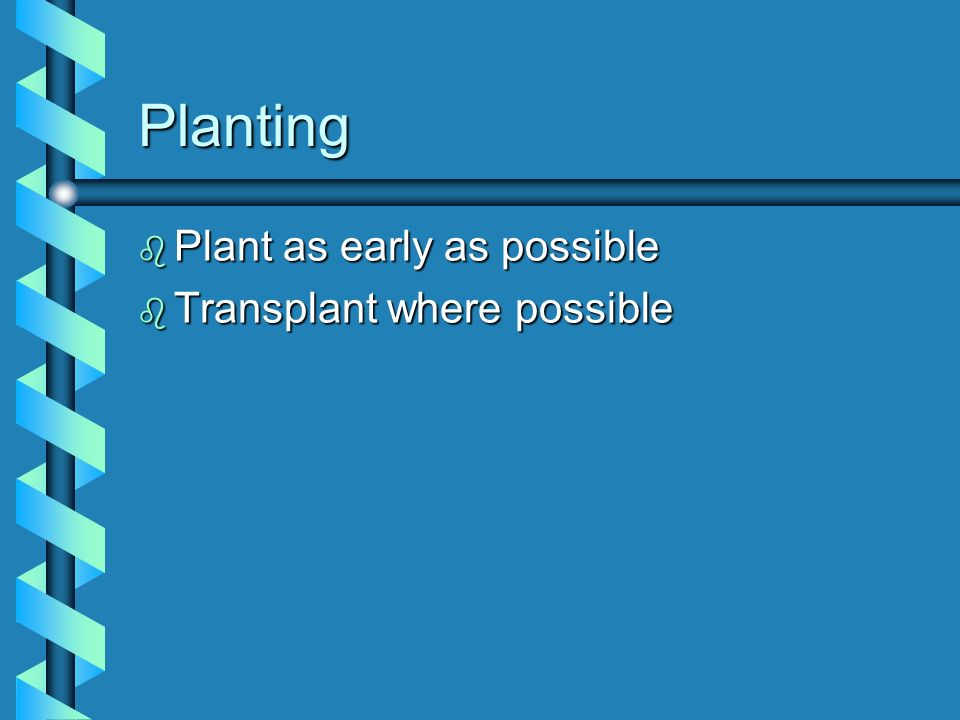 Planting Plant as early as possible Transplant where possible