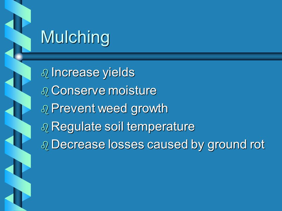 Mulching Increase yields Conserve moisture Prevent weed growth