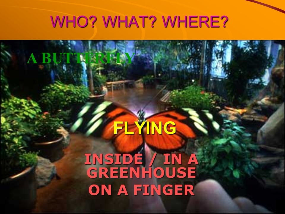 INSIDE / IN A GREENHOUSE ON A FINGER