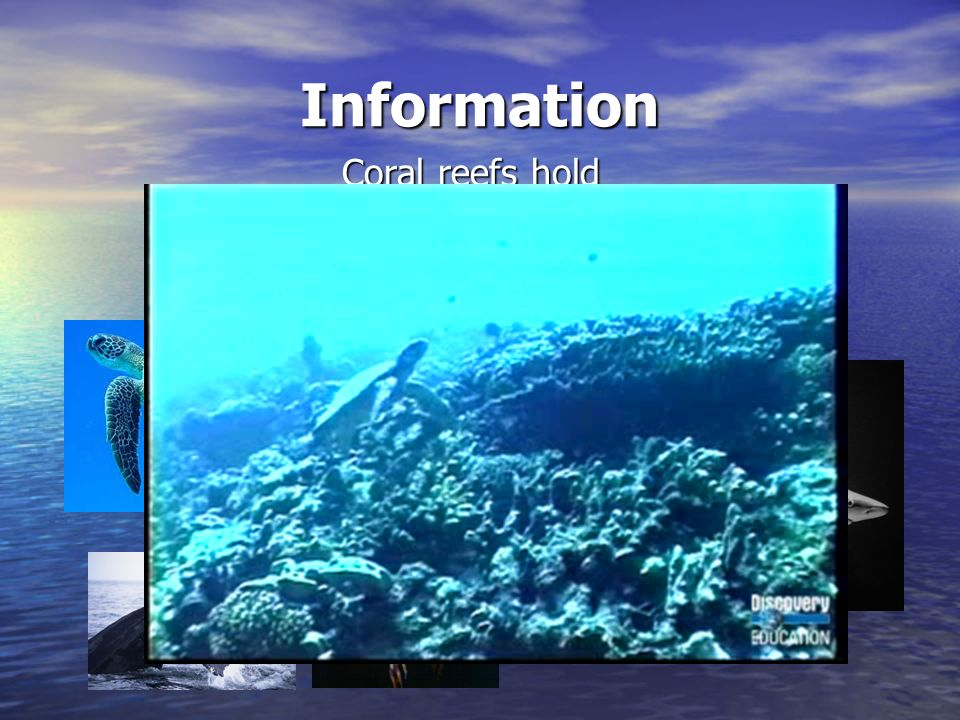 Information Coral reefs hold numerous animals including whales, turtles, and fish