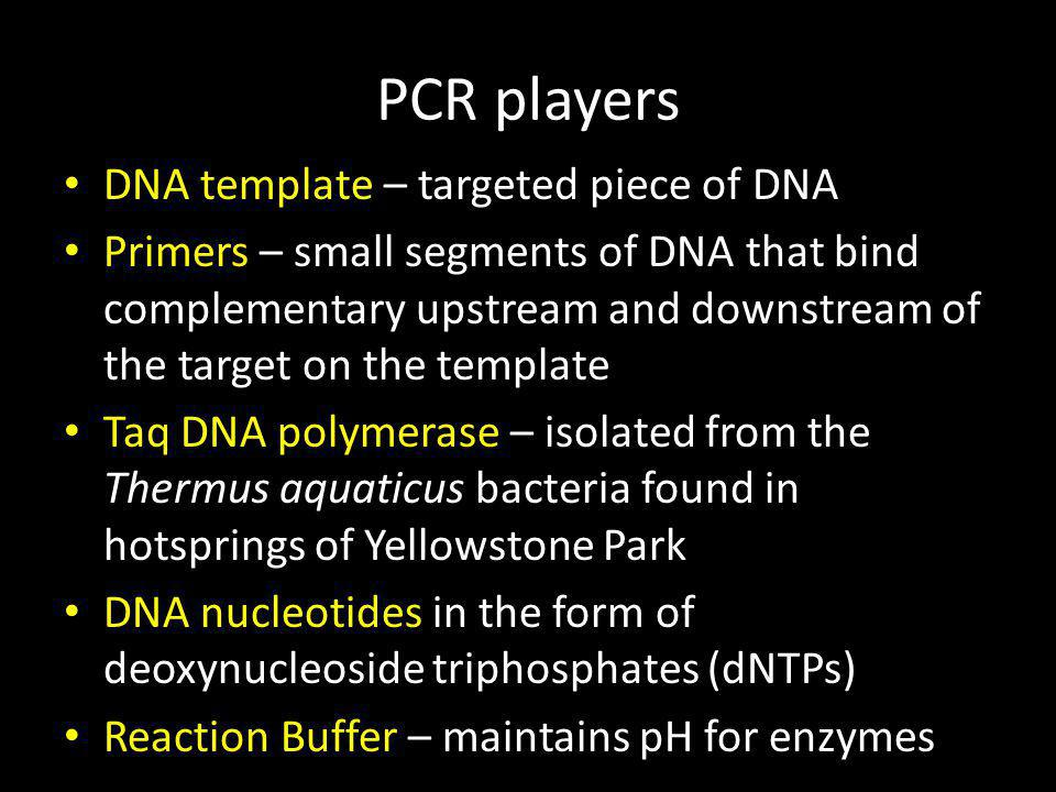 PCR players DNA template – targeted piece of DNA