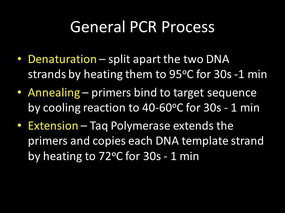 General PCR Process Denaturation – split apart the two DNA strands by heating them to 95oC for 30s -1 min.