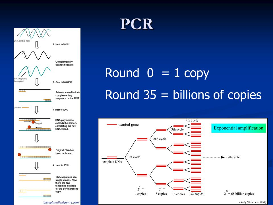 PCR Round 0 = 1 copy Round 35 = billions of copies