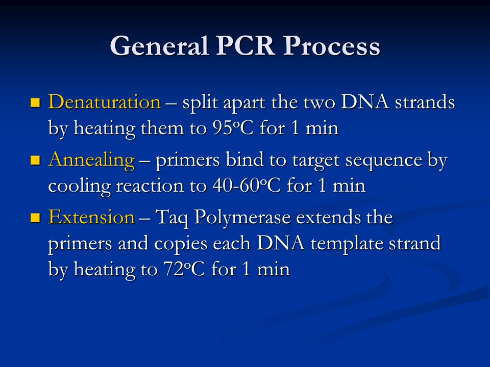 General PCR Process Denaturation – split apart the two DNA strands by heating them to 95oC for 1 min.