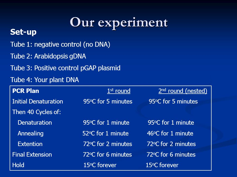 Our experiment Set-up Tube 1: negative control (no DNA)