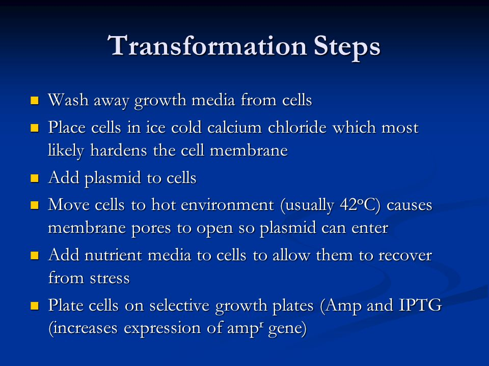Transformation Steps Wash away growth media from cells