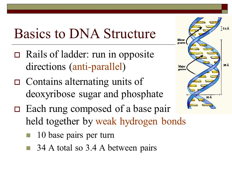 Basics to DNA Structure