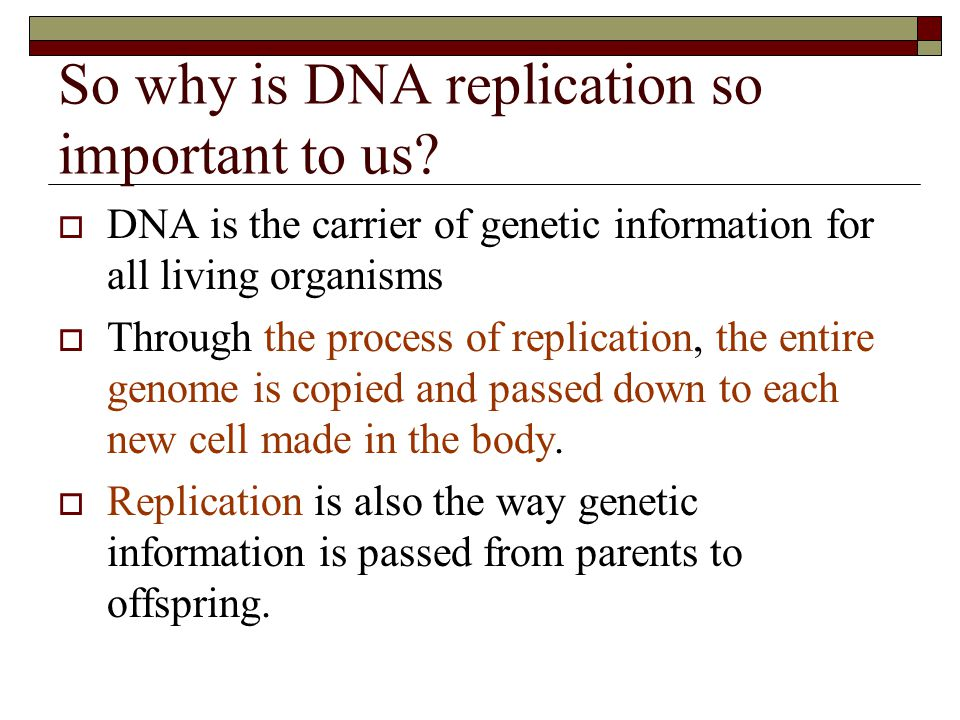 So why is DNA replication so important to us