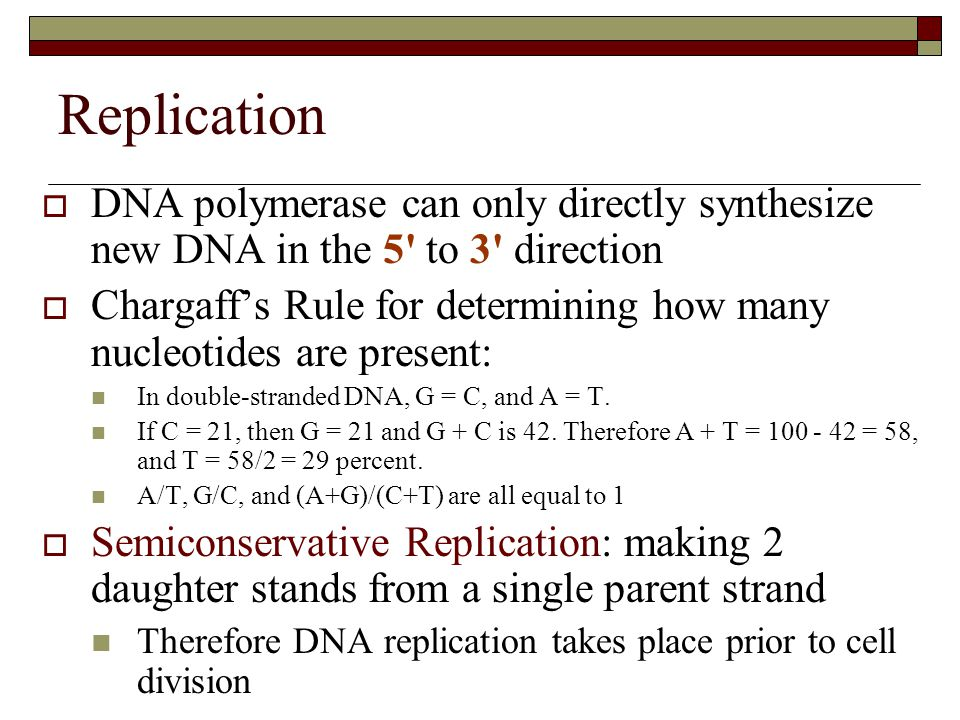 Replication DNA polymerase can only directly synthesize new DNA in the 5 to 3 direction.