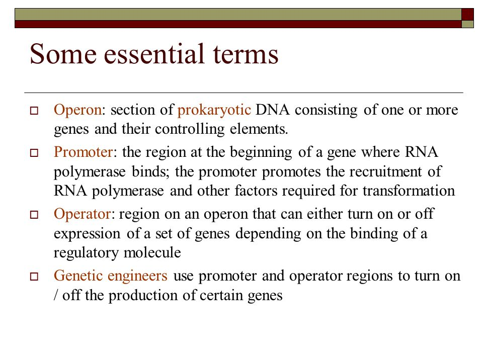 Some essential terms Operon: section of prokaryotic DNA consisting of one or more genes and their controlling elements.