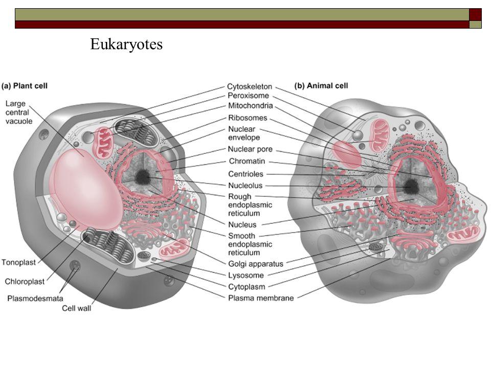 Eukaryotes Figure 2.2