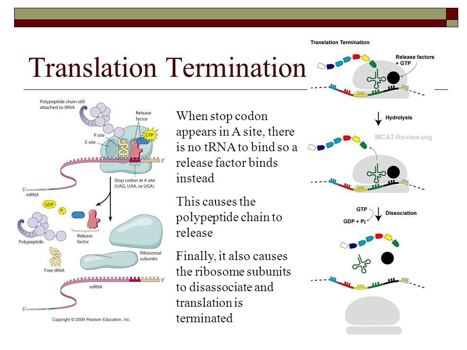 Translation Termination
