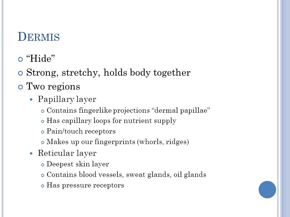 Dermis Hide Strong, stretchy, holds body together Two regions