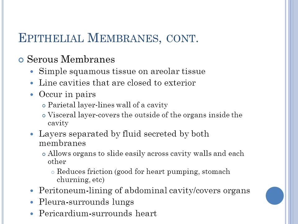 Epithelial Membranes, cont.