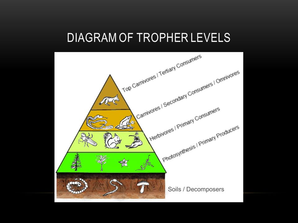 Diagram of TROPHER LEVELS