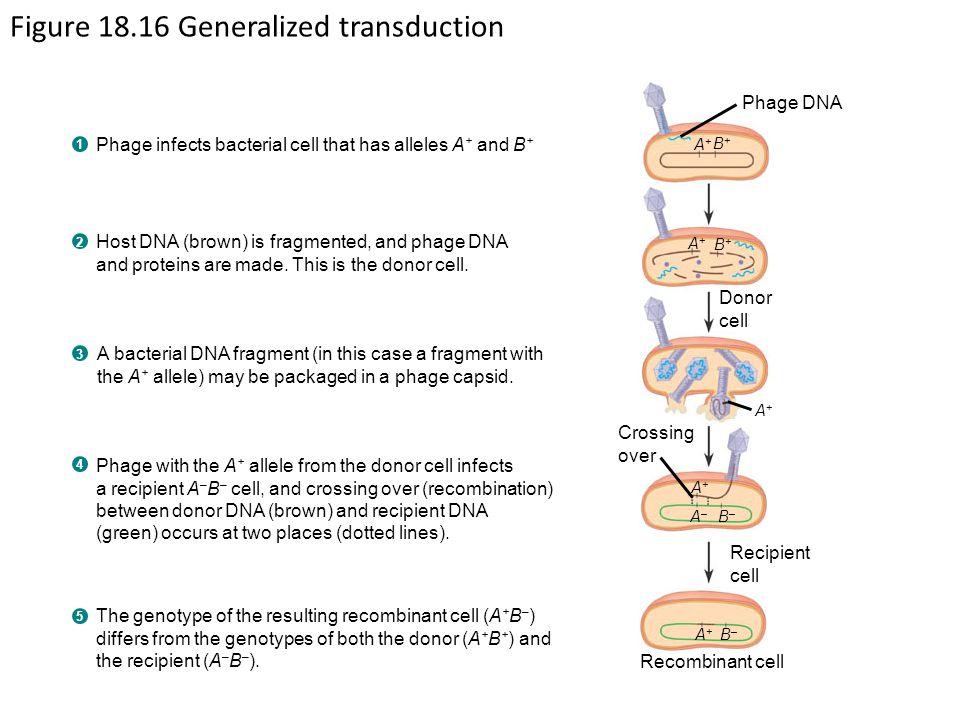 Figure 18.16 Generalized transduction