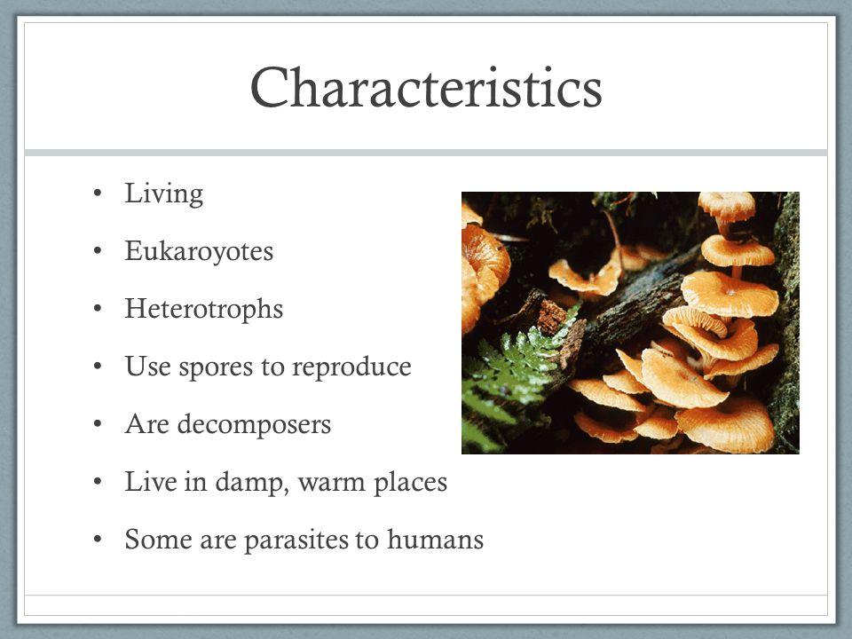Characteristics Living Eukaroyotes Heterotrophs