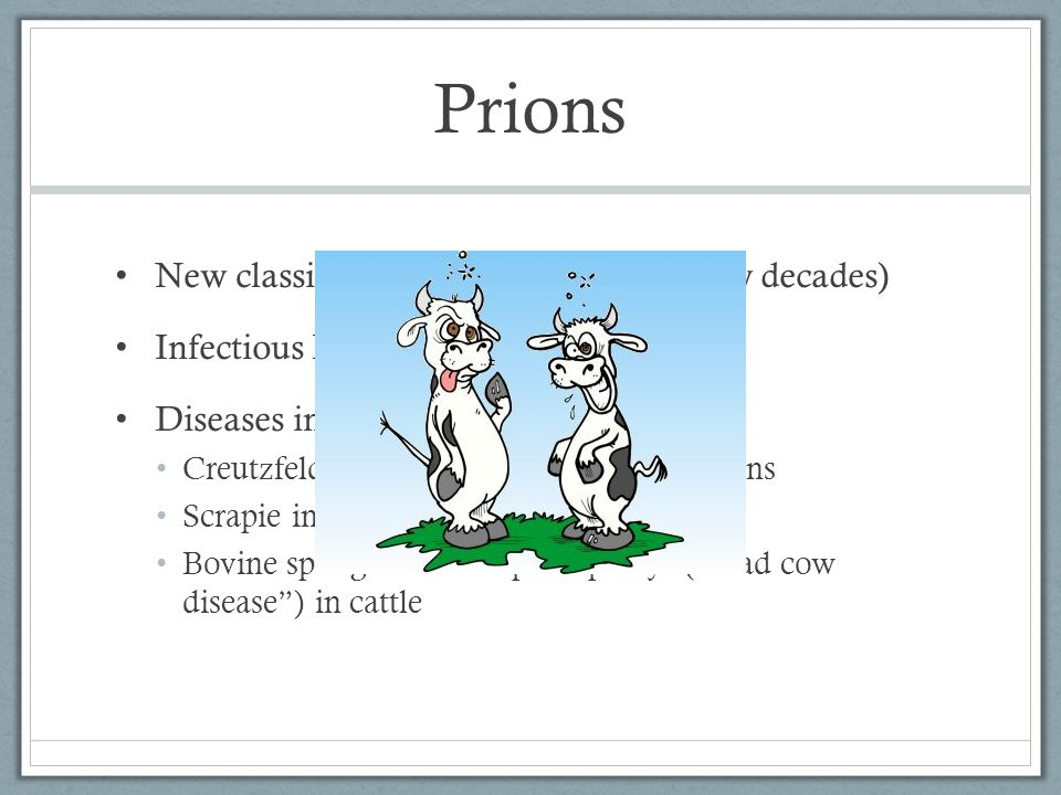 Prions New classification of pathogen (last few decades)