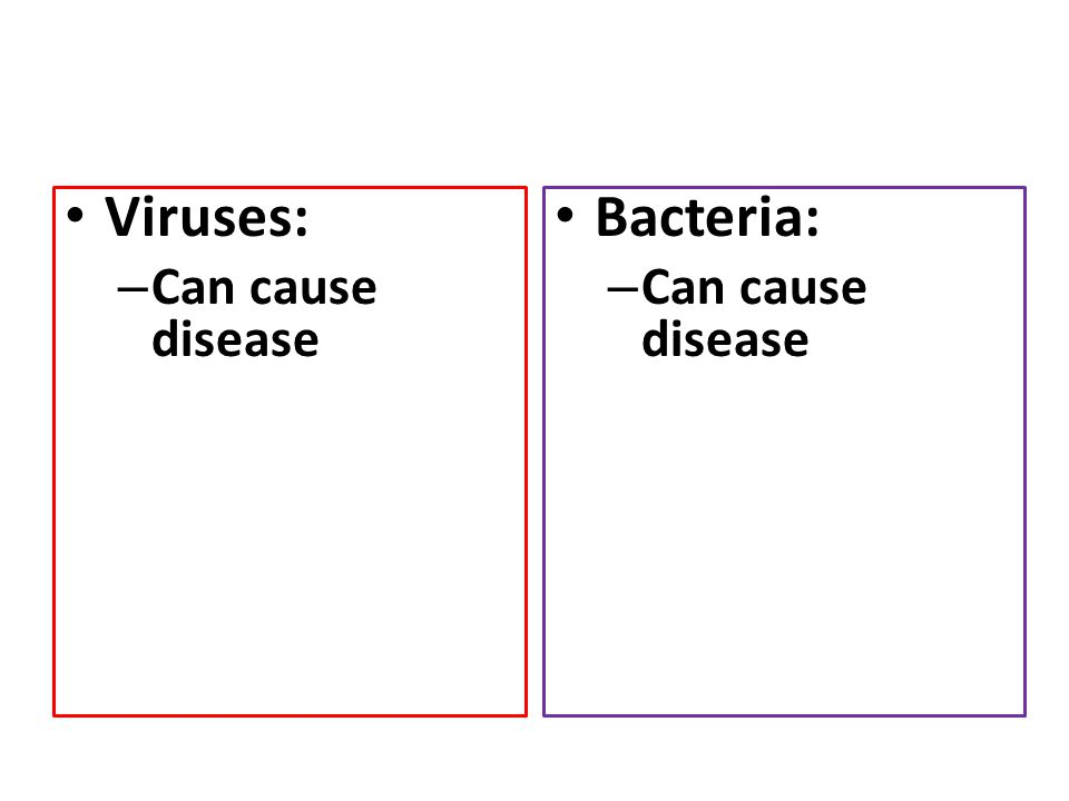 Viruses: Can cause disease Bacteria: Can cause disease