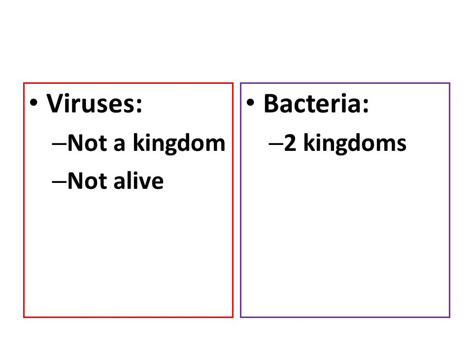 Viruses: Not a kingdom Not alive Bacteria: 2 kingdoms