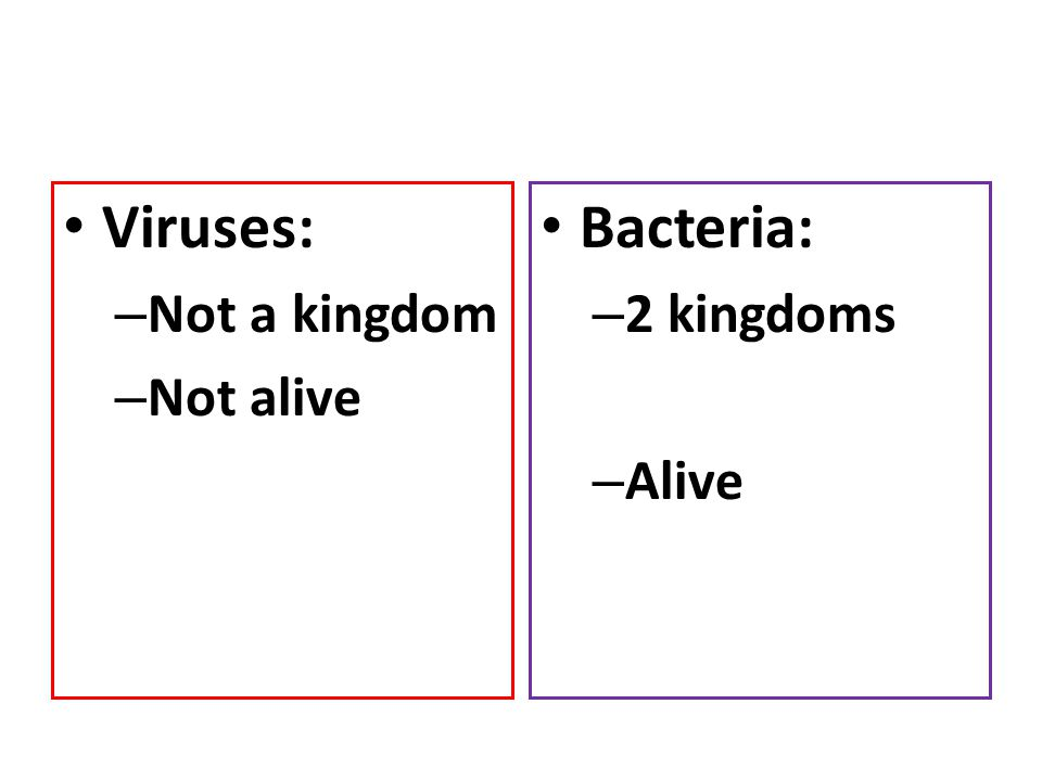 Viruses: Not a kingdom Not alive Bacteria: 2 kingdoms Alive