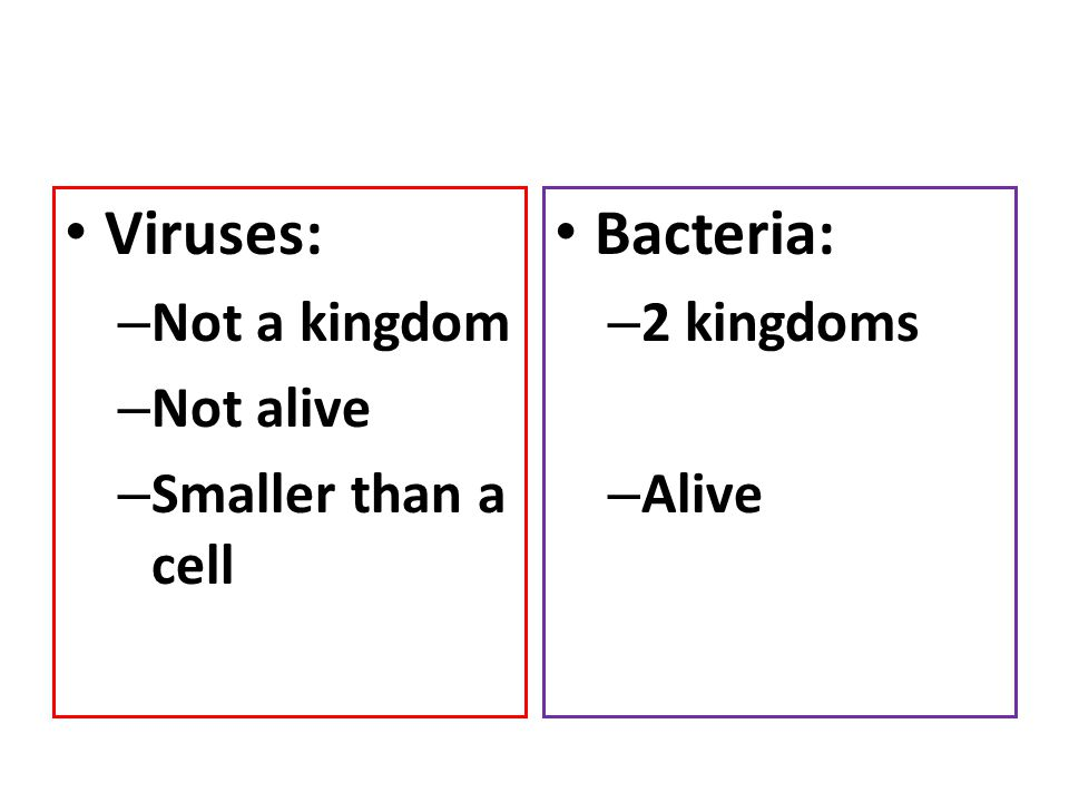 Viruses: Bacteria: Not a kingdom Not alive Smaller than a cell