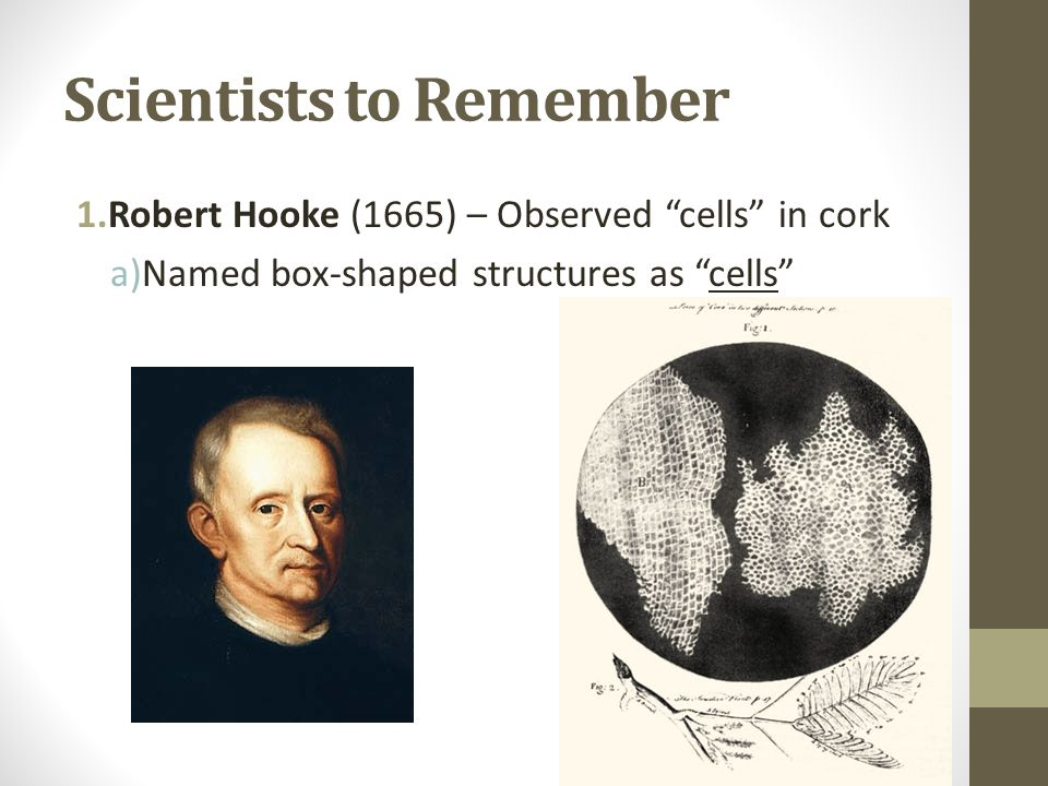 Scientists to Remember