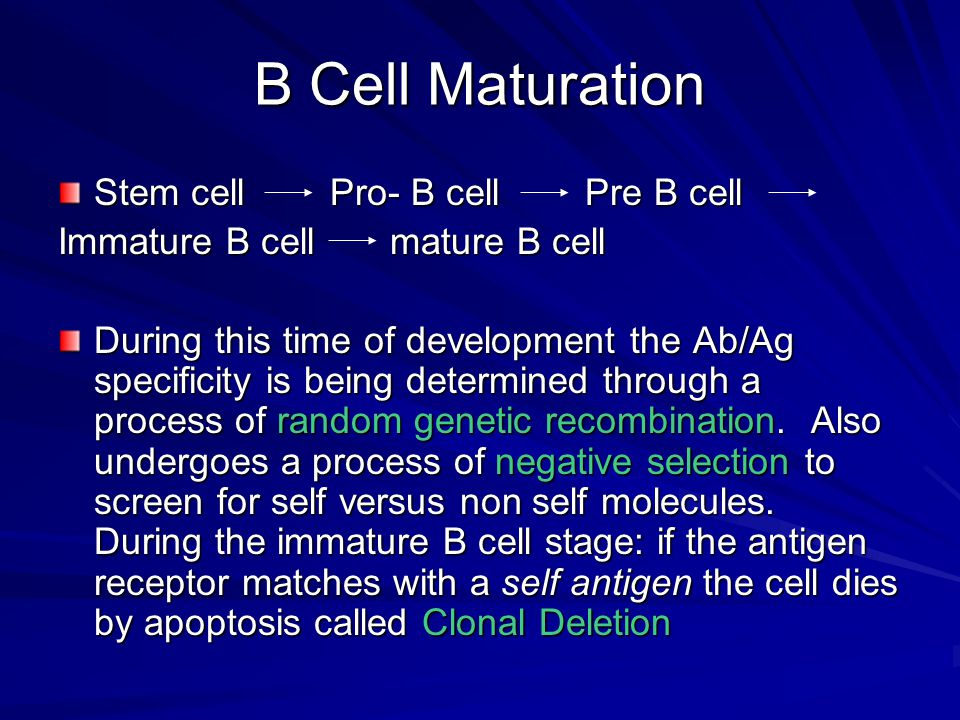 B Cell Maturation Stem cell Pro- B cell Pre B cell