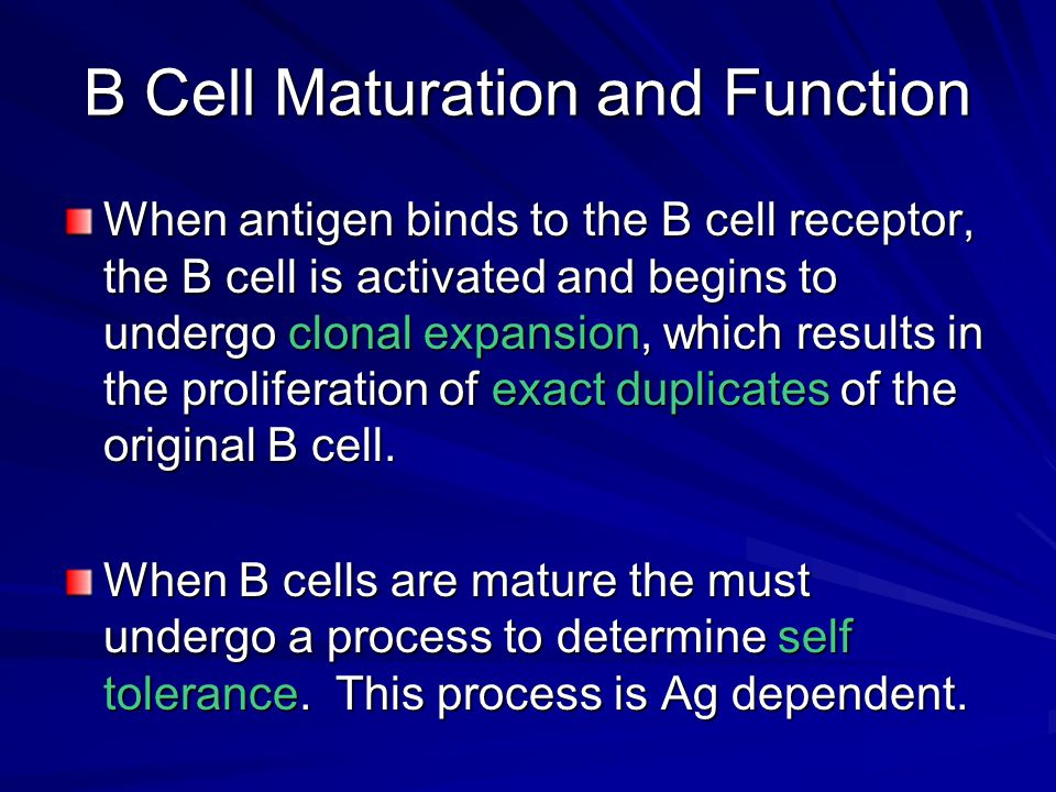 B Cell Maturation and Function