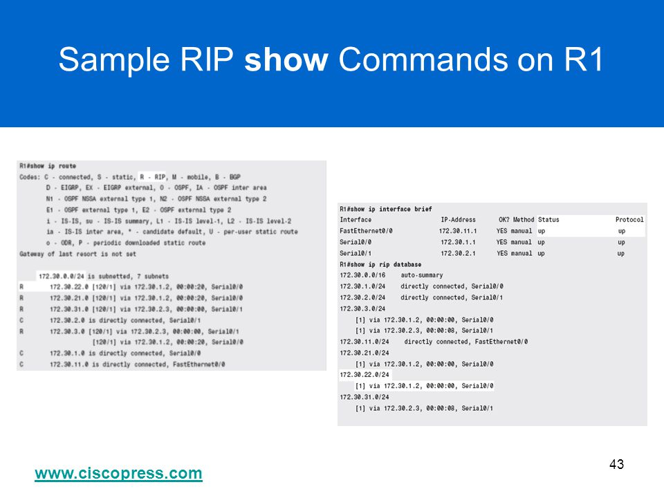 Sample RIP show Commands on R1