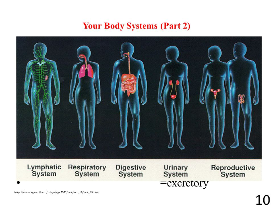 Your Body Systems (Part 2)