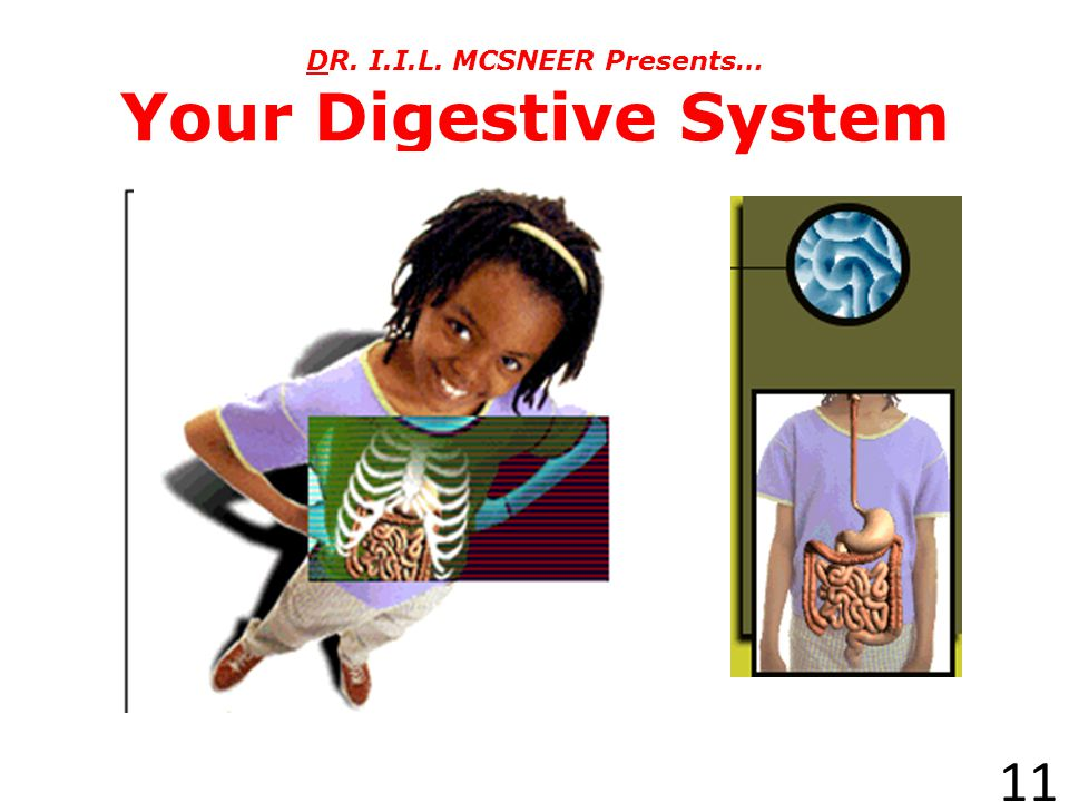DR. I.I.L. MCSNEER Presents… Your Digestive System