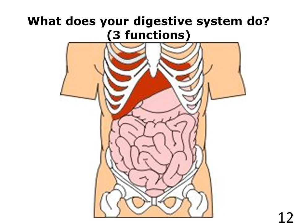 What does your digestive system do (3 functions)