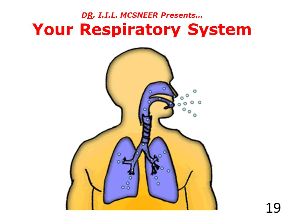 DR. I.I.L. MCSNEER Presents… Your Respiratory System