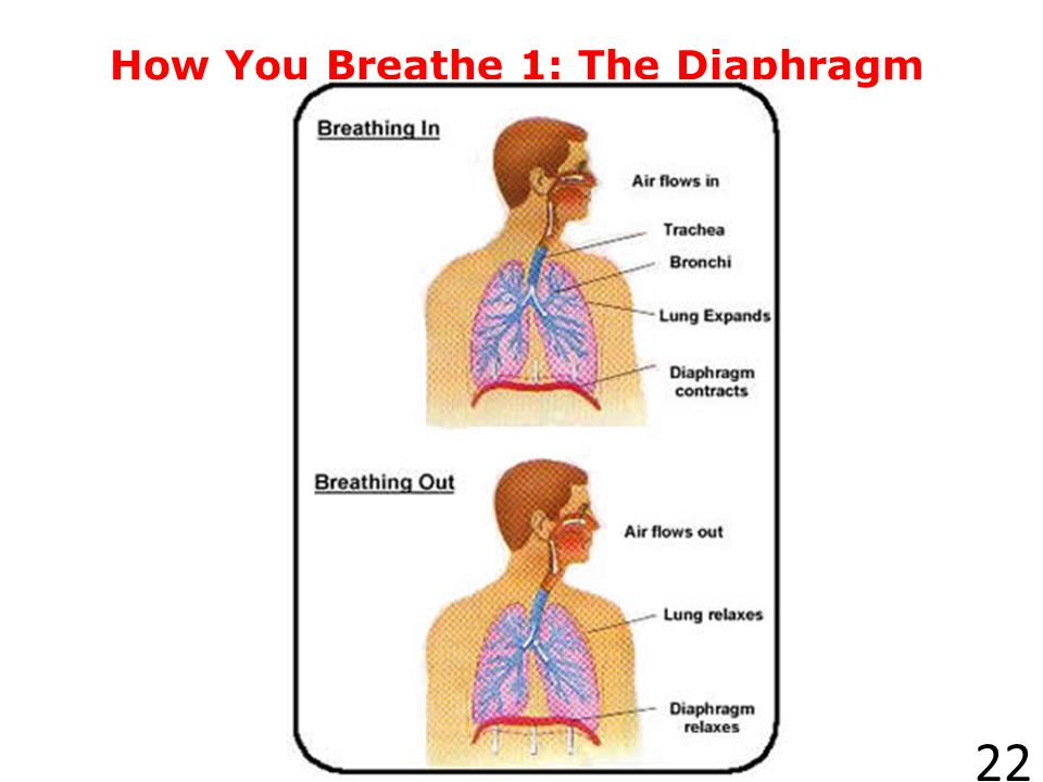 How You Breathe 1: The Diaphragm