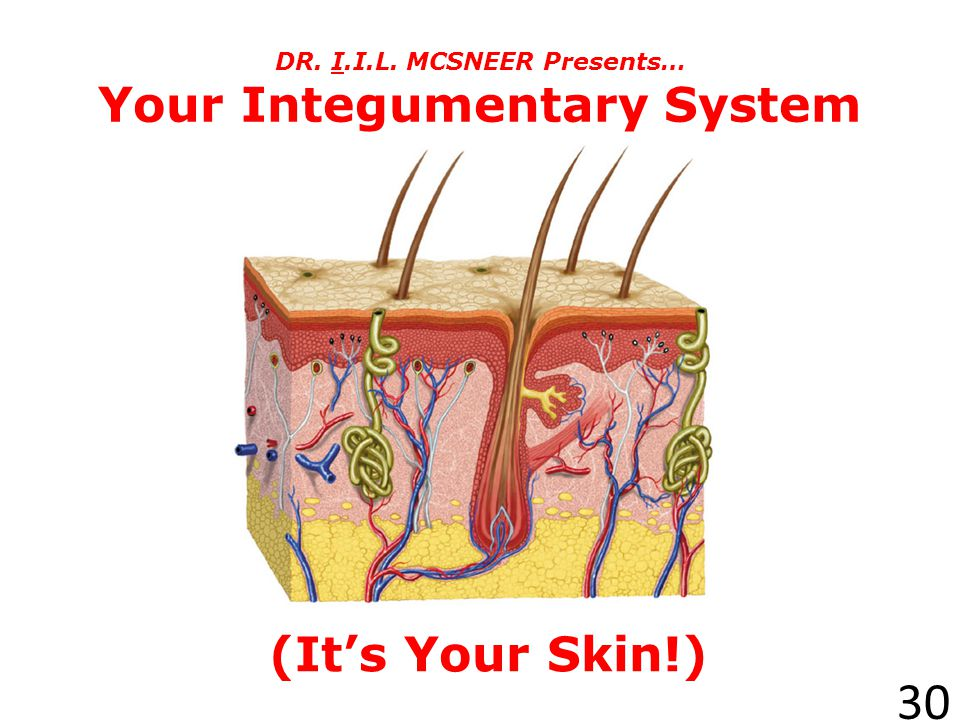 DR. I.I.L. MCSNEER Presents… Your Integumentary System