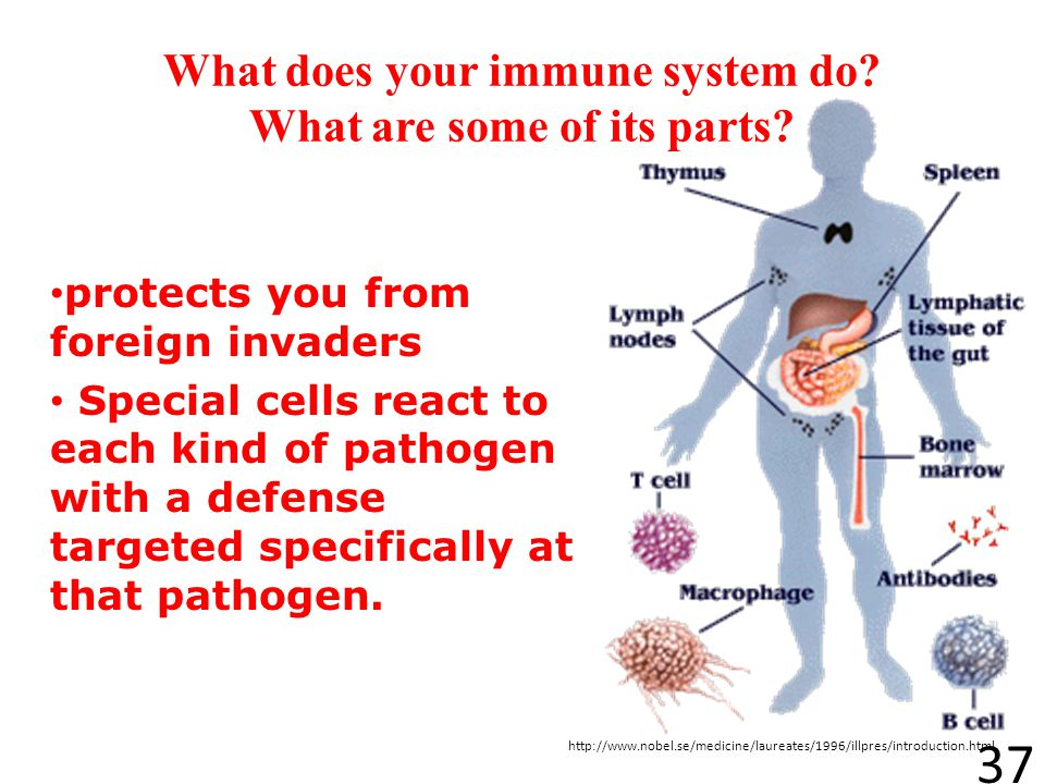 What does your immune system do What are some of its parts