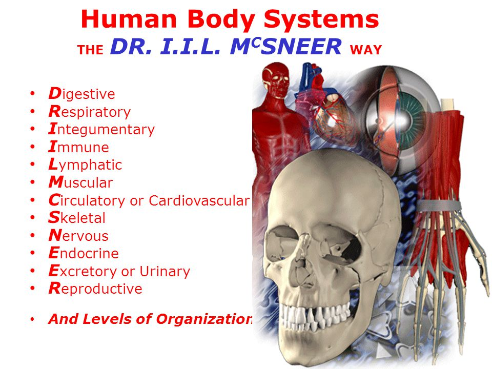 Human Body Systems THE DR. I.I.L. MCSNEER WAY