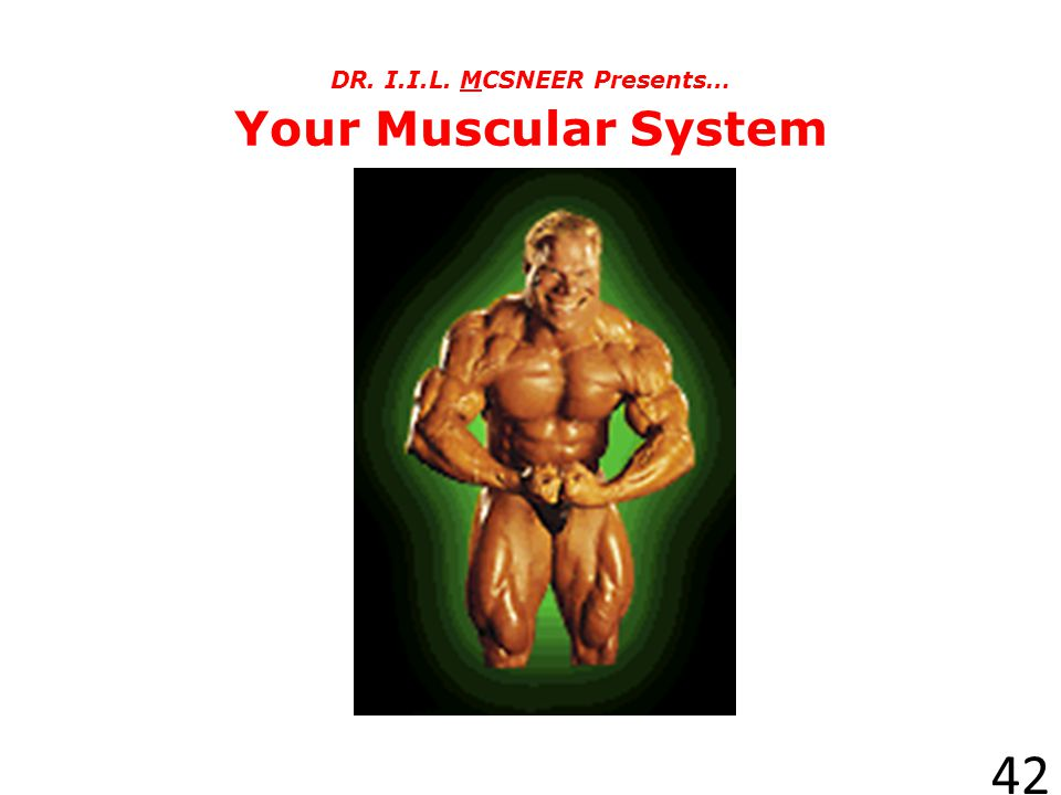 DR. I.I.L. MCSNEER Presents… Your Muscular System