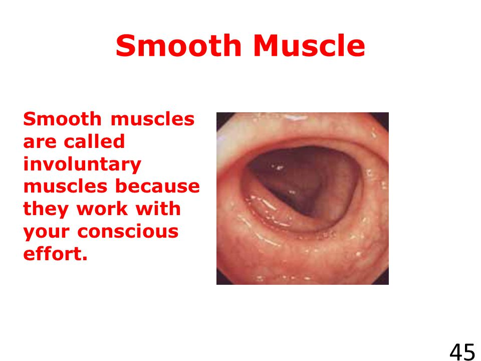 Smooth Muscle Smooth muscles are called involuntary muscles because they work with your conscious effort.