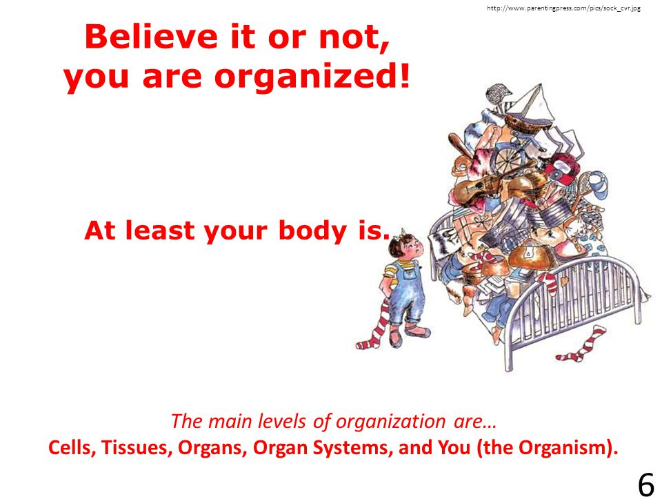 Believe it or not, you are organized! At least your body is.