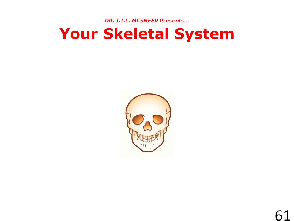 DR. I.I.L. MCSNEER Presents… Your Skeletal System