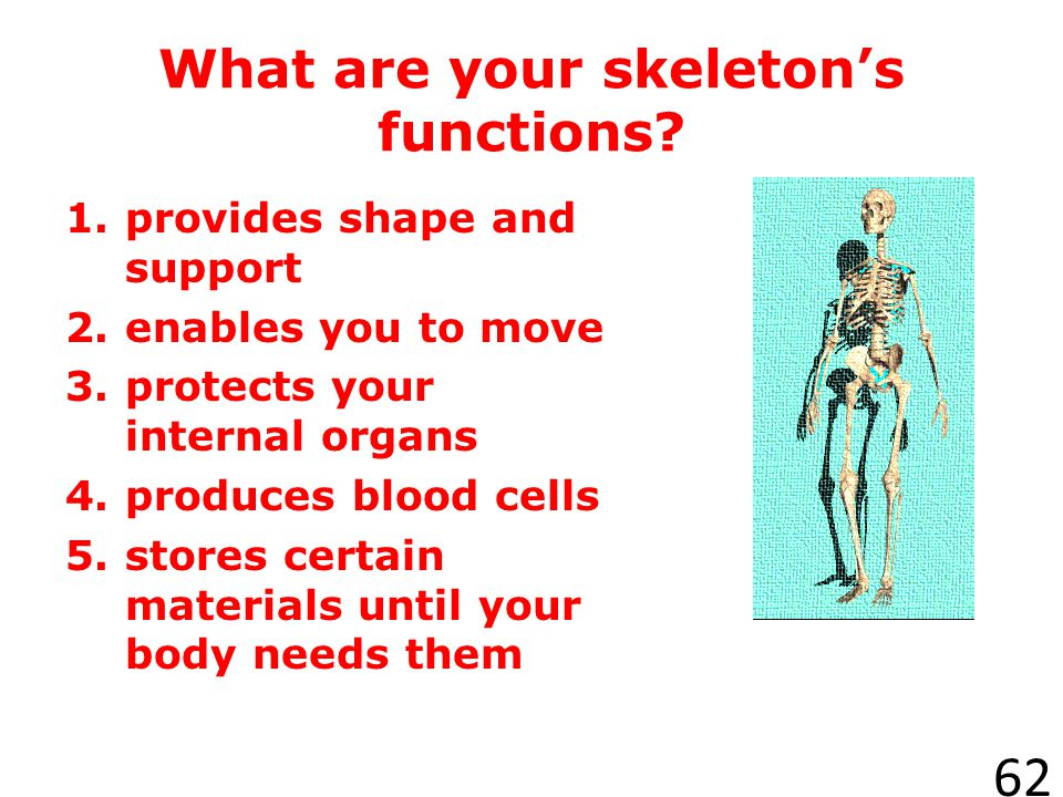 What are your skeleton's functions
